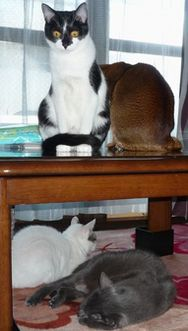 猫暮らしの手帖